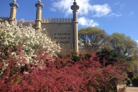 Brighton Pavillion Garden Museum - Internship in Brighton